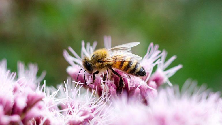 élever des abeilles.