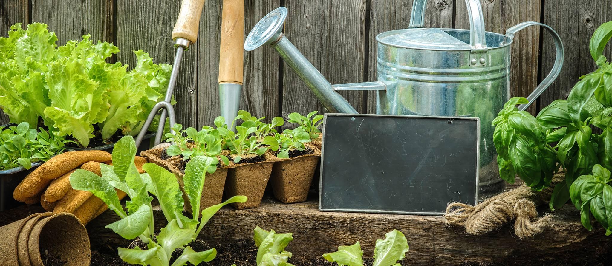 aménager un jardin écologique.