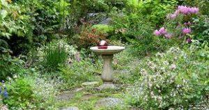 jardin naturel et sauvage.
